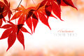 Autumn Leaves Stock Image - 33026321