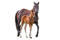 Horse With Foal Royalty Free Stock Photography - 33052517