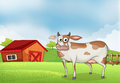 A Cow In The Farm With A Wooden House At The Back Royalty Free Stock Image - 33072186