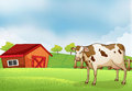A Cow In The Farm With A Barn House Stock Images - 33073544