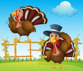 A Turkey Above The Wooden Fence And A Turkey Wearing A Hat Royalty Free Stock Photos - 33096778