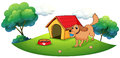 A Dog Playing With A Blue Ball Near A Doghouse Stock Photos - 33098853