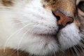 Cat Nose Royalty Free Stock Photo - 33129175