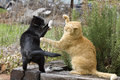 Two Cats Fighting Royalty Free Stock Photography - 33145667