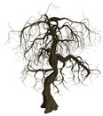 Gnarled Old Tree With Bare Branches Stock Photo - 33194330