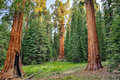 Sequoia National Park Stock Image - 33197801