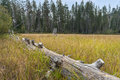 Downed Log In A Meadow Stock Photo - 33201500
