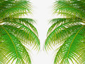 Palm Tree Leafs Stock Image - 33237101