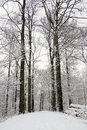 Forest Covered With Snow Stock Photo - 33270940