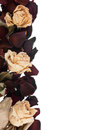 Dried Roses Stock Image - 33286151