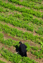 God`s Agriculture,monk At Work Royalty Free Stock Photos - 33299768