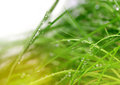 Soft Green Grass Background Stock Images - 33305914