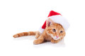Christmas Santa Cat Stock Photo - 33312080