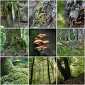 Forest Collage Stock Image - 33327101