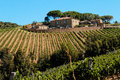 Vineyard In Tuscany Stock Photo - 33327670