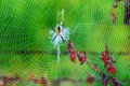 Spider Web Royalty Free Stock Photography - 33344007