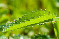 Dew Drops Royalty Free Stock Image - 33359946
