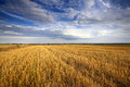 Stubble Field Stock Images - 33370444