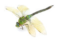 Dragonfly Royalty Free Stock Image - 33432326