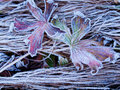 First Frost Stock Images - 33481744