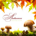 Autumn Background With Yellow Leaves And Autumn Mushroom Royalty Free Stock Image - 33503046