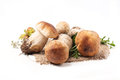 Ceps Mushrooms Royalty Free Stock Photography - 33549087