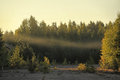 Mist Over The Forest Stock Photo - 33586790