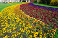 Colorful Flowerbed Royalty Free Stock Image - 33594026