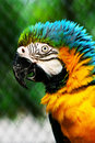 Parrot Stock Image - 3363541