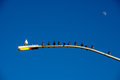 Very Interesting Shot Of Birds On Light Pole All But ONE Facing Same Direction. Royalty Free Stock Photo - 33609955
