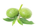 Green Walnuts Stock Images - 33646254