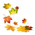 Beautiful Autumn Leaves Falling Down Royalty Free Stock Photo - 33671465