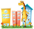 A Giraffe Standing In Front Of The Tall Buildings Royalty Free Stock Photo - 33692365