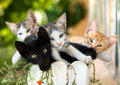 Kittens In A Pot Royalty Free Stock Images - 33699439