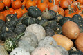 Pumpkins And Gourds Royalty Free Stock Photo - 3370635