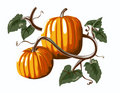Two Pumpkins Stock Image - 3377971