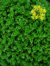 Gear Leaves And Yellow Flower Royalty Free Stock Photos - 3379888