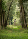 Forest Landscape Stock Photography - 33752332