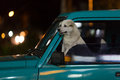 Dog In A Car Window Royalty Free Stock Photos - 33765408