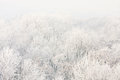 Frosted Trees On A Sunny Morning. Royalty Free Stock Images - 33768309