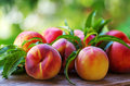 Ripe Peaches And Leaves Stock Photography - 33770712