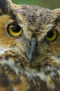 Great Horned Owl Stock Photo - 3384050