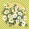 Daisy Bouquet Royalty Free Stock Photography - 33839137