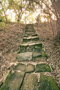 Forest Pathway With Stairs Royalty Free Stock Photo - 33839705