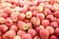 Red Gala Apple Harvest Royalty Free Stock Images - 33845619