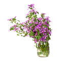 Wild Violet Flowers In Glass Jar Royalty Free Stock Photography - 33850077
