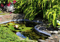 Garden Pond Royalty Free Stock Photo - 33852915