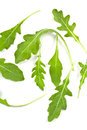 Fresh Rucola Leaves Stock Image - 33861921