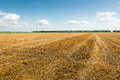 Stubble Field After Harvesting Grain Stock Photo - 33872770