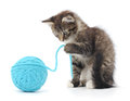 Cat With Ball Of Yarn Stock Images - 33898934